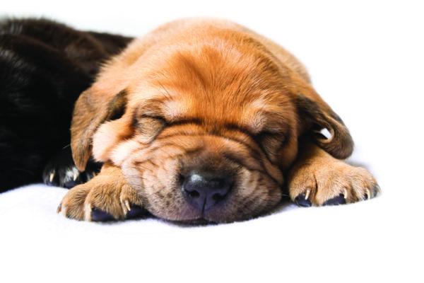 Ginger pups2-8 copy